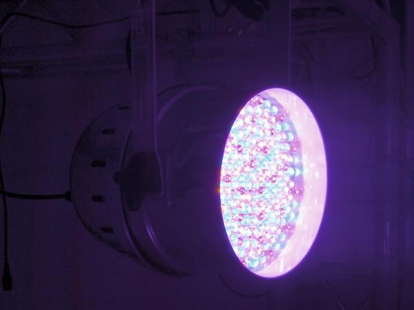 EUROLITE LED PAR-64 RGBA 10mm Short sw